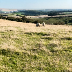 Top Five Outdoorsy Things to do in East Sussex.