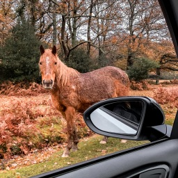 Five Things to do in The New Forest